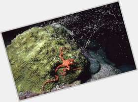 "<a href=""/hot-men/the-coral/is-he-snake-venomous-reef-ecosystem-alive-danger"">The Coral</a>"